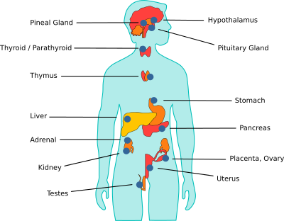 Human body hormones - antibodies-online.com