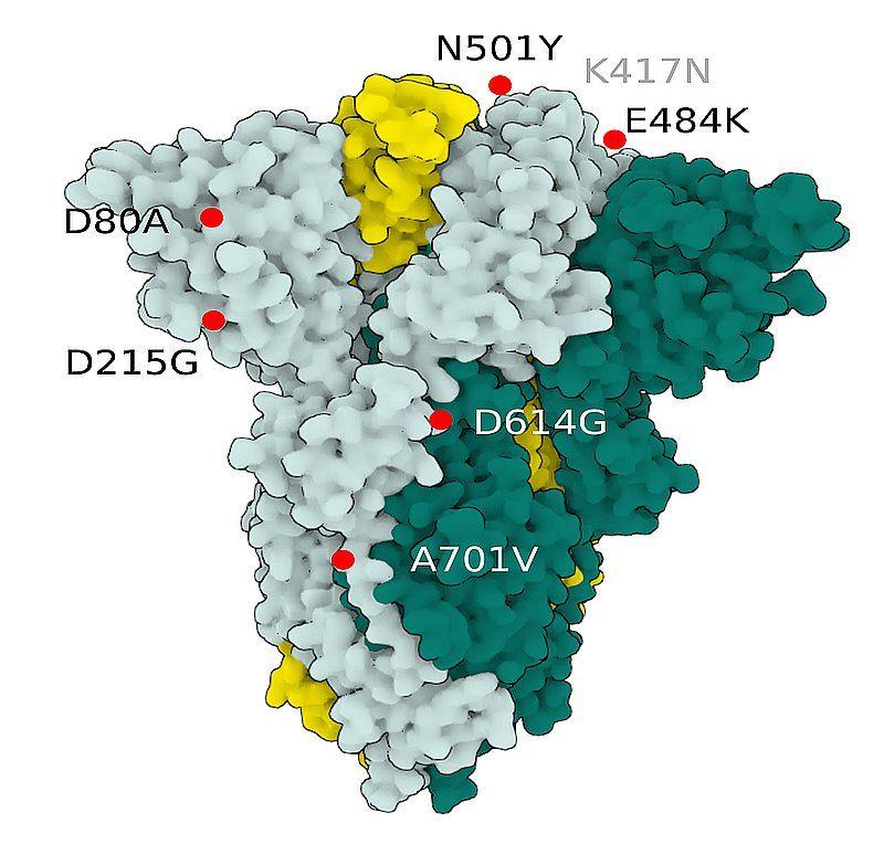 Fig.3 SARS-CoV-2 S Protein B.1.351 (beta)