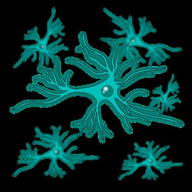 astrocyte - antibodies-online.com